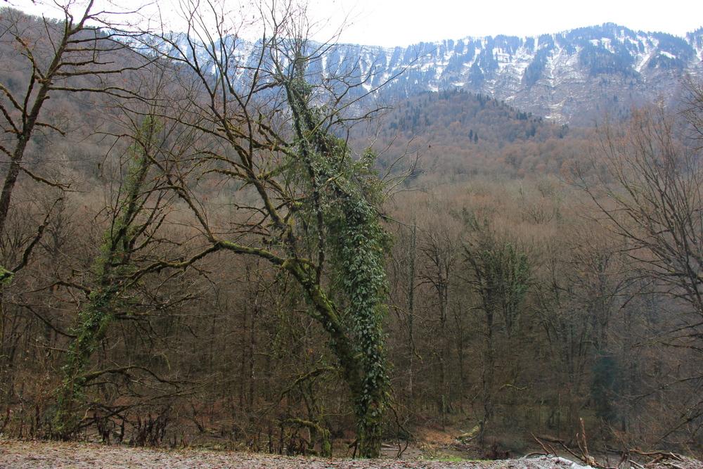 Вид на плато горы Абацы.